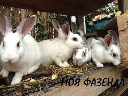 Дачное выращивание кроликов