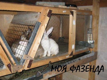 Рекомендации по строительству клеток для кроликов