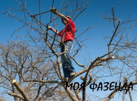 Почему летом стоит обрезать плодовые деревья