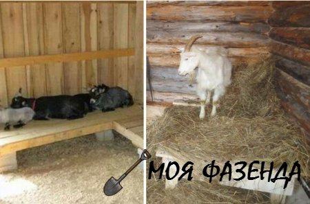 Помещение для содержания коз, построенное своими руками