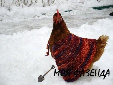 Чтобы вашим курочкам зимой было комфортно и тепло