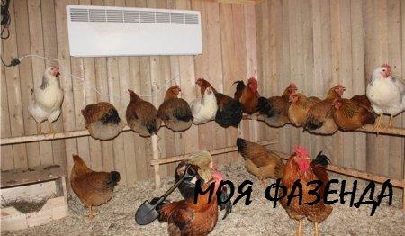 Комфортные условия содержания домашних кур – это правильно обустроенный курятник