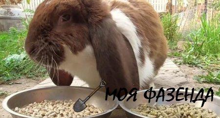 Как и когда использовать комбикорм при кормлении кроликов