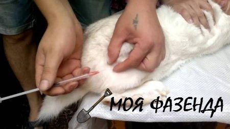 Как защитить животных от эпидемии пастереллеза